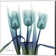 Blue Ombre Tulips Fine-Art Print