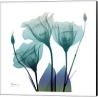 Gentian Buddies 2 Fine-Art Print
