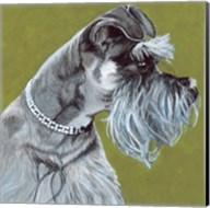 Dlynn's Dogs - Zoee Fine-Art Print