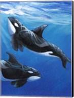 Under Sea Whales II Fine-Art Print