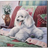 White Poodle Fine-Art Print