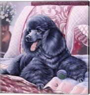 Black Poodle Fine-Art Print