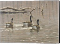 Early Spring Geese Trio Fine-Art Print