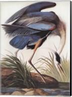Great Blue Heron Fine-Art Print