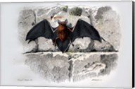 Bat I Fine-Art Print