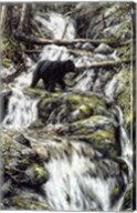 Bear Creek Crossing Fine-Art Print