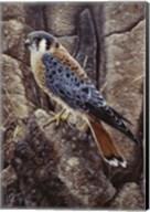 Blue Hawk Fine-Art Print