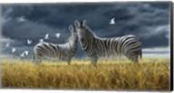 Coming Of Rain Zebra Fine-Art Print