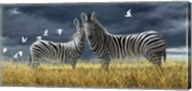 Coming Of Rain Zebra Fine-Art Print