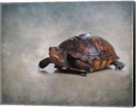Box Turtle Portrait Fine-Art Print