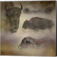 Buffalo Dreams Fine-Art Print