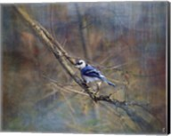 Color My World Blue Jay Fine-Art Print