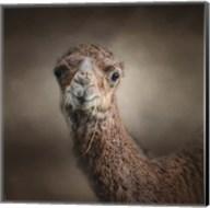 Eat Your Veggies Camel Fine-Art Print