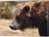 Grizzly Watch Fine-Art Print