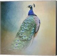 Peacock 4 Fine-Art Print