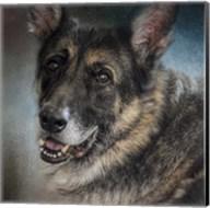 Portrait Of A Shepherd Fine-Art Print