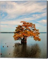 Cypress In Autumn 2 Fine-Art Print