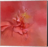 Salmon Hibiscus 2 Fine-Art Print