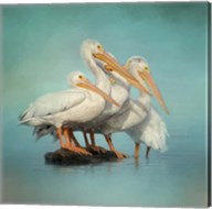 We Are Family White Pelicans Fine-Art Print