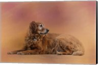 Golden Retriever In The Setting Sun Fine-Art Print