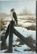 Hawk Eye Fine-Art Print