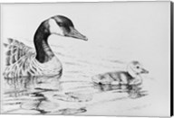 Canada Goose And Baby Fine-Art Print