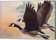 Canada Geese Fine-Art Print