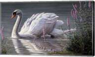 Summer Idyll - Mute Swan Fine-Art Print