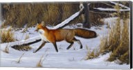 Fox Trot  - Red Fox Fine-Art Print