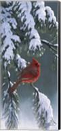 Winter Light 1 Fine-Art Print