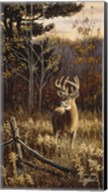 Autumn Whitetail Fine-Art Print