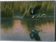 Evening Flight - Great Blue Heron Fine-Art Print