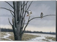 Old Elm & Redtails Fine-Art Print