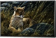 Cougar In The Grass Fine-Art Print