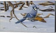 Bluejay Fine-Art Print