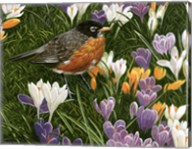 Springtime Robin With Crocus Fine-Art Print