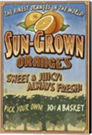 Sun Grown Oranges Fine-Art Print