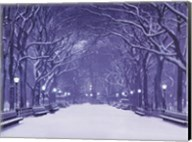 Winter In Central Park Fine-Art Print