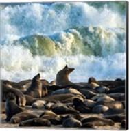 Cape Fur Seals, Cape Cross, Namibia Fine-Art Print