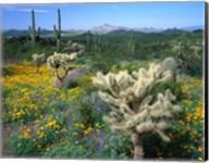 Arizona, Organ Pipe Cactus National Monument Fine-Art Print