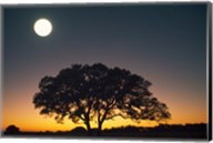Full Moon Over Silhouetted Tree Fine-Art Print