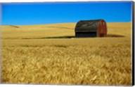 Red barn in wheat field, Palouse region, Washington, USA. Fine-Art Print