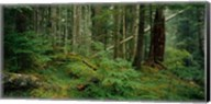 Hoh Rainforest, Olympic National Forest, Washington State Fine-Art Print