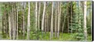Bow Valley Parkway, Banff National Park, Alberta, Canada Fine-Art Print