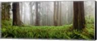 Vine Maple Trees, Mt Hood, Oregon Fine-Art Print