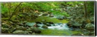 Creek in Great Smoky Mountains National Park, Tennessee Fine-Art Print