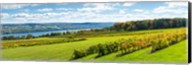 Glenora Vineyard, Seneca Lake, Finger Lakes, New York State Fine-Art Print