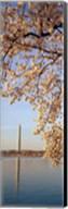 Washington DC Fine-Art Print