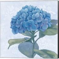 Blue Hydrangea IV Fine-Art Print