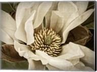 Classic Magnolia II Fine-Art Print